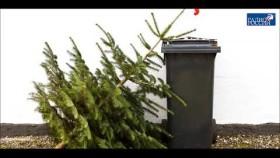 Какая елка экологичнее: пластмассовая или живая? Обсуждаем с Иваном Калининым в эфире радио России