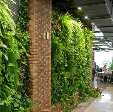 Озеленение помещений Фотоматериалы нашей работы Фото №2