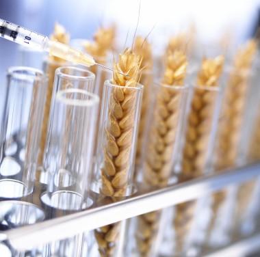 Химический анализ продуктов питания Фотоматериалы нашей работы Фото №6