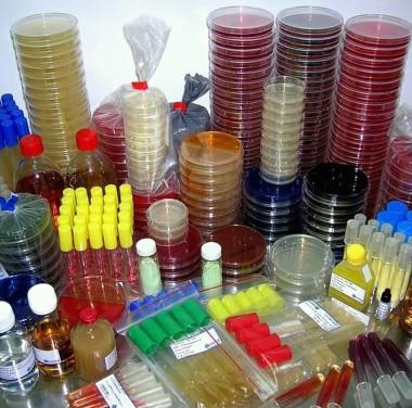 Микробиологический анализ воды Фотоматериалы нашей работы Фото №3