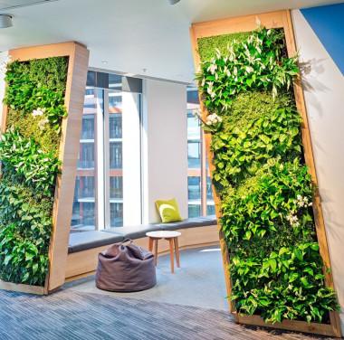 Фитостены (вертикальное озеленение) Фотоматериалы нашей работы Фото №4