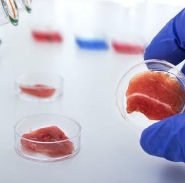 Микробиологический анализ продуктов питания Фотоматериалы нашей работы Фото №3