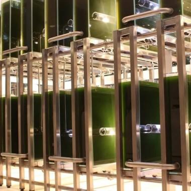 Концентрат из хлореллы для питания — суперфуд №5 фото