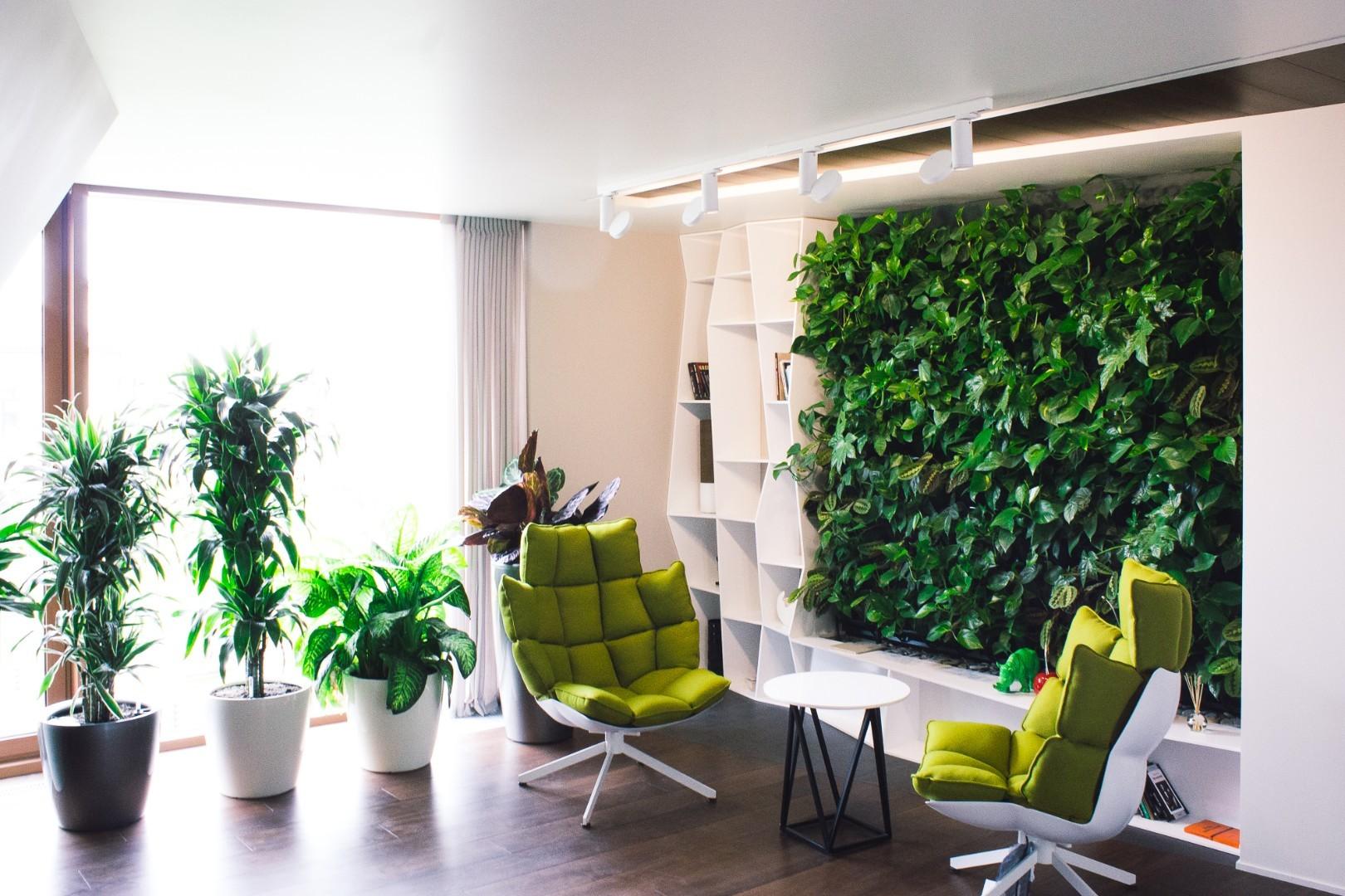 Озеленение квартиры фото