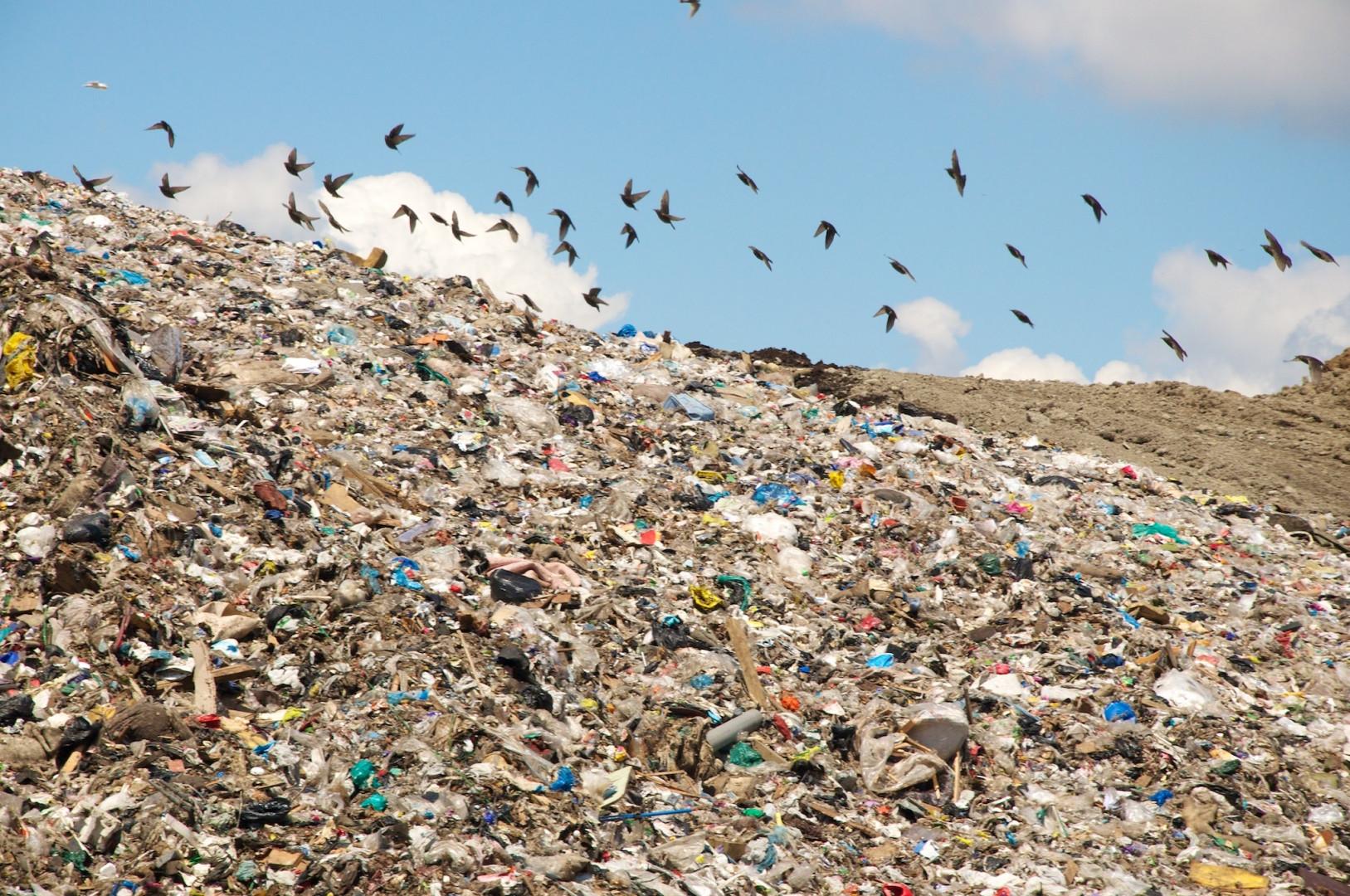 Помимо техногенных, стоит учитывать и другие виды загрязнений фото