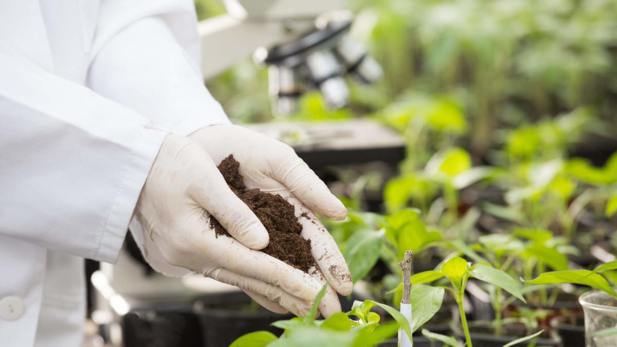 Микробиологический анализ почвы (грунта, донных отложений) фото