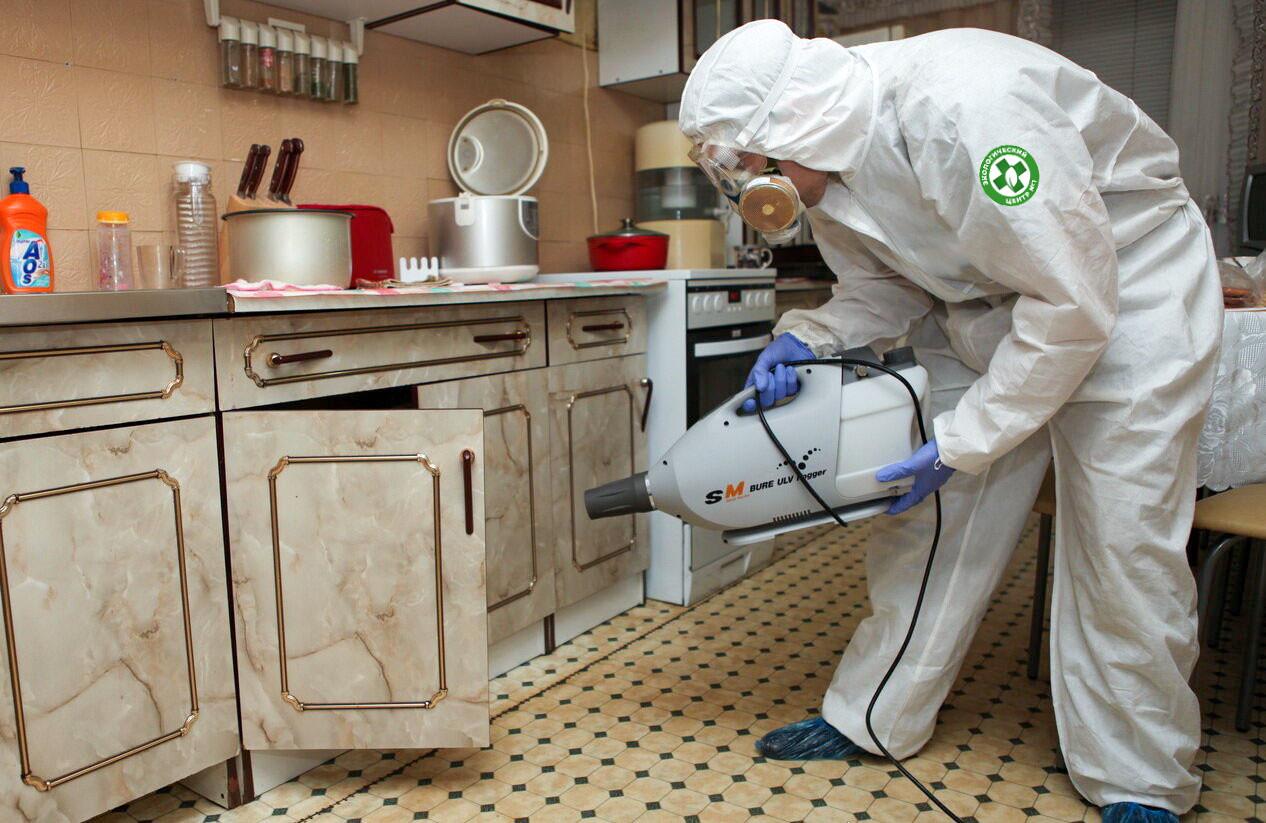 Как происходит обработка против насекомых-вредителей и паразитов фото