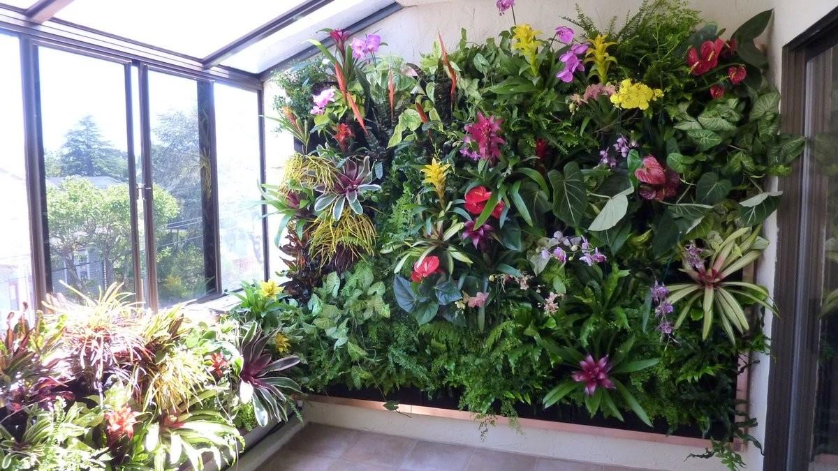 Растения для фитостен, которые любят много солнца фото