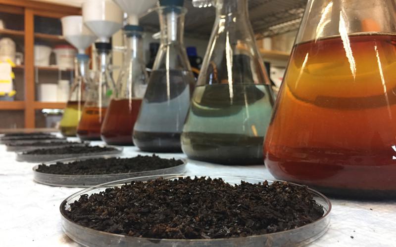 Микробиологический анализ почвы (грунта, донный отложений) фото