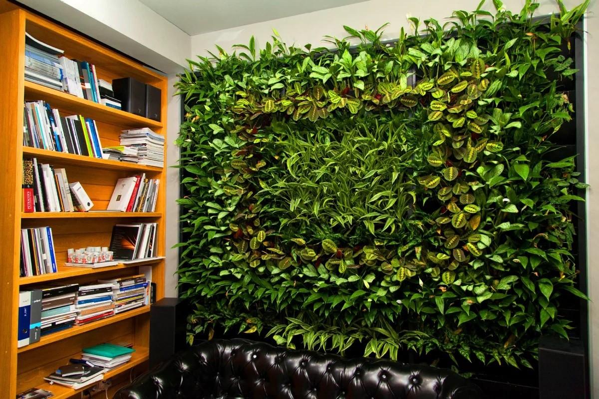 Растения для фитостен, которые хорошо растут в тени фото