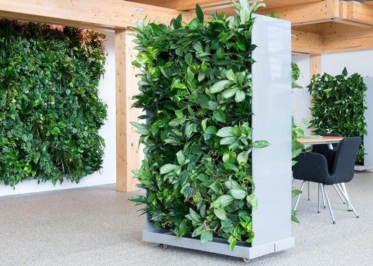 Вертикальное озеленение и фитодизайн фото