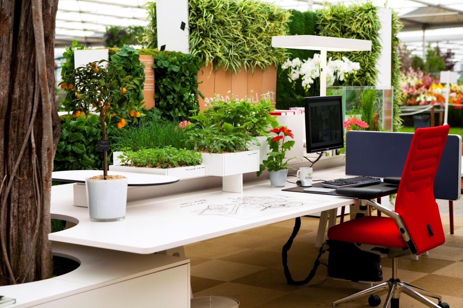 Фитодизайн в офисе фото