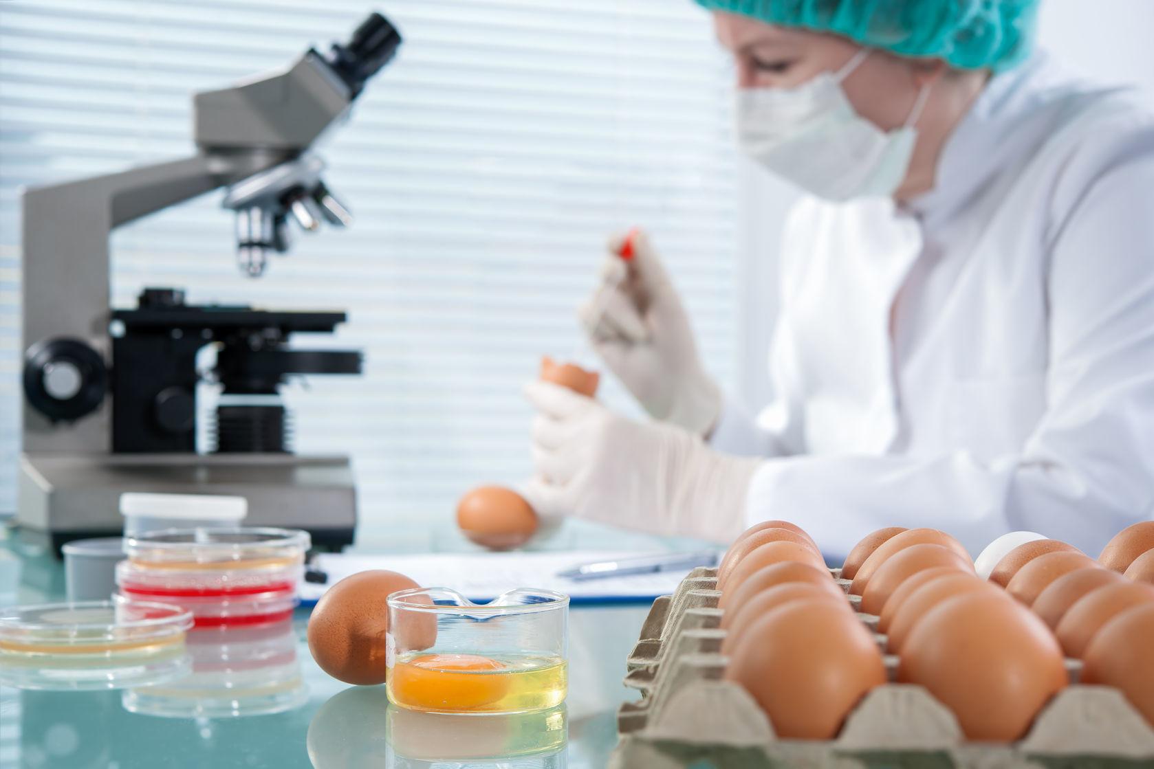 Микробиологический анализ продуктов питания фото